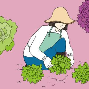 3/24 神戸野菜学【レタス】@ KIITO