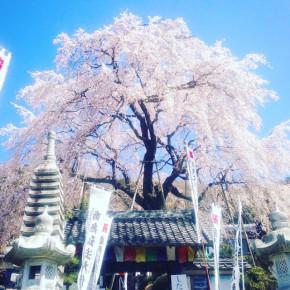 3/30 瞑想音楽会:春の縁日 – 寺cafe @ 林陽寺・岐阜