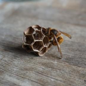 スズメバチと根気比べ