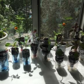 20200928:窓際菜園その2